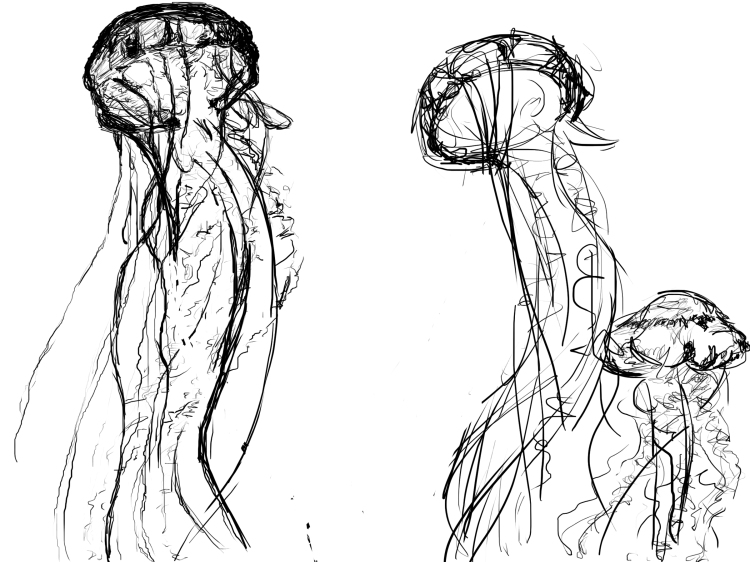 jellyfish-sketch
